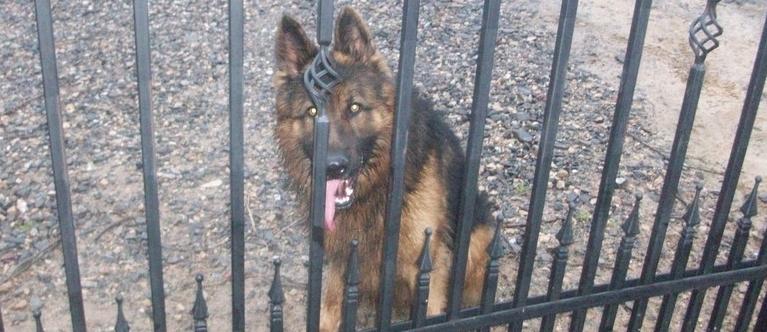 Znaleziono psa w miejscowości Niedrzwica Duża - 23.1.2015