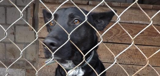 Poszukujemy właściciela dla psa - 5.2.2015