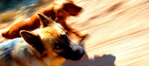 Apel do mieszkańców Gminy Niedrzwica Duza w sprawie nadzoru nad zwierzętami