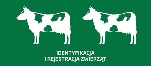 Szanowny Rolniku pamiętaj o obowiązku dokonania spisu zwierząt